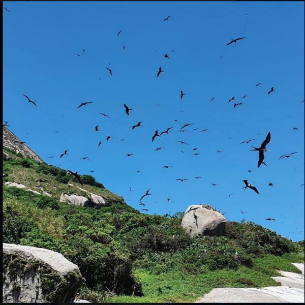 Aves em Alcatrazes