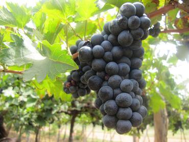 Corrida e cultura do vinho
